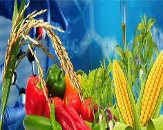 Experiments on hybrid food crops :- Pakissan.com