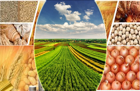 impact of commodity prices on agriculture industry This paper quantifies the impact of agricultural commodity price shocks using   in benin, the agricultural sector accounts for 38% of gdp and.