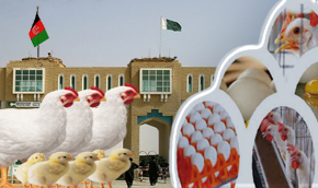 Threat to poultry industry :- Pakissan.com