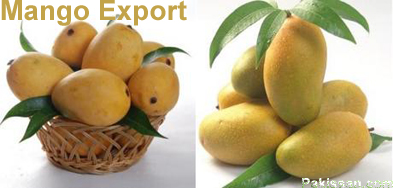 Mango Export From Pakistan And Wto Regime On Food