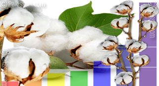 Depleting stocks push up cotton prices to seasonal high rates :-Pakissan.com
