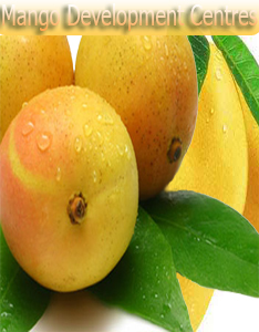 Government urged to set up mango development centres :Pakissan.com