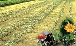 Pakissan Com Drip Irrigation Need Of The Time