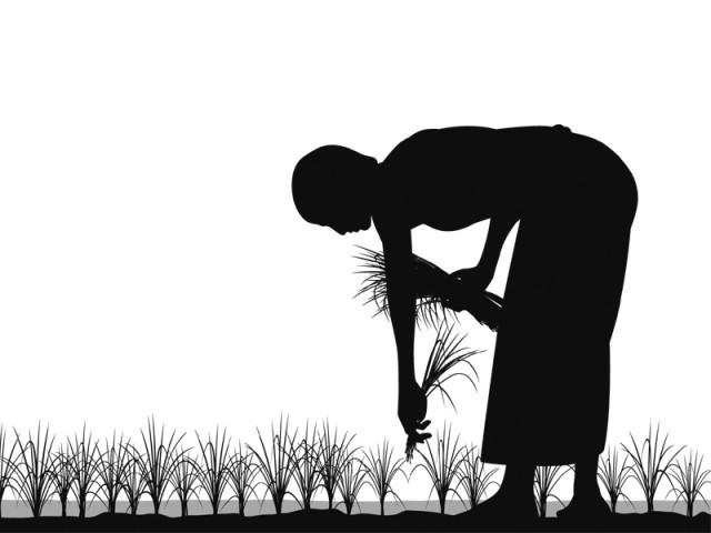 Primitive ways keeping agriculture sector backward: Pakissan.com