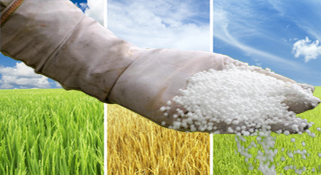 Inefficient fertiliser use damaging soil fertility in Punjab			:-Pakissan.com