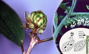 Biological control of natural enemies