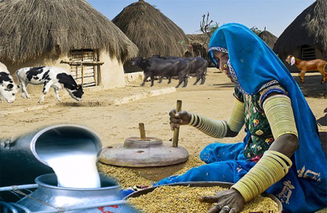 Rural dairy farming and alleviation of poverty -: Pakissan com