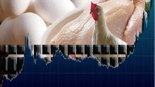 Poultry Market Rates / Market Price -: Pakissan com