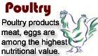 poultry :- Pakissan.com